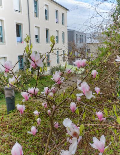 Photo d'un magnolia donnant sur l'un des bâtiment
