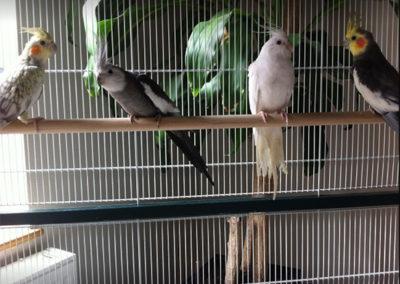 Photos des oiseaux de l'EPHAD